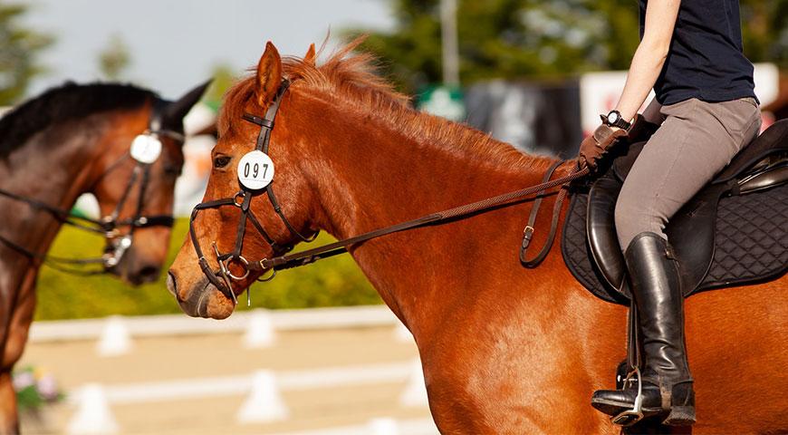 Imagem em destaque Importância do Mercado de Apostas para o Desenvolvimento do Horseball - Importância do Mercado de Apostas para o Desenvolvimento do Horseball